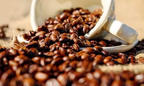 Kafein Membantu Tanaman Bertahan hidup
