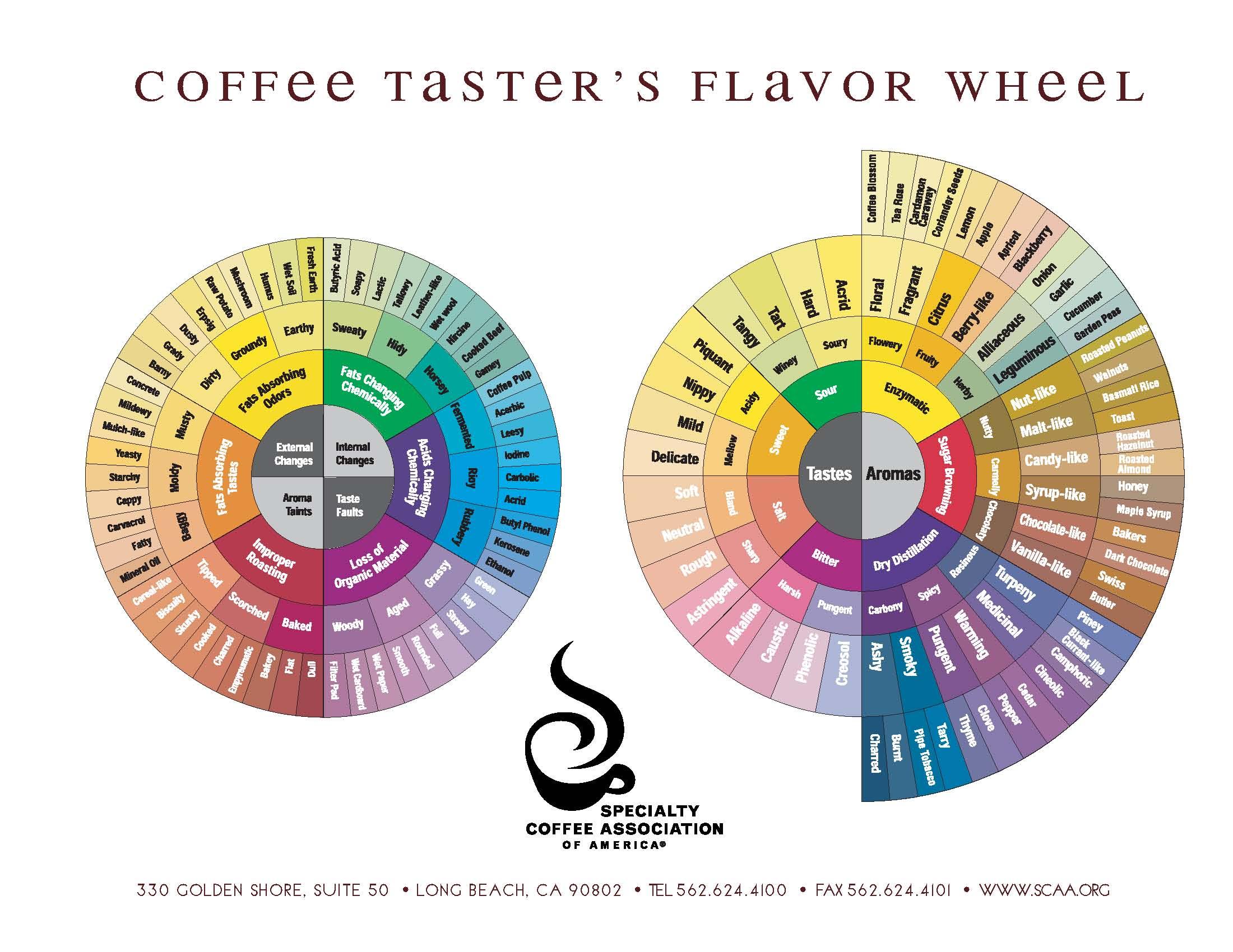 Disclaimer sada coffee coffee tasters flavour wheel ccuart Gallery