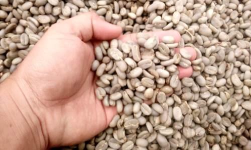 green bean sada coffee