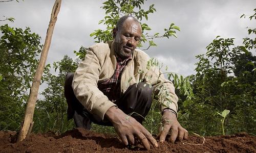 Ethiopia Kopi, Seperti Apa?