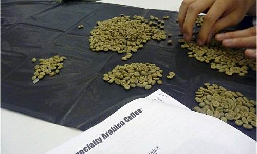 Green Grading Test, Tahap Menjadi Q Grader