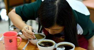 Cita Rasa Kopi, Coffee Flavour Wheel