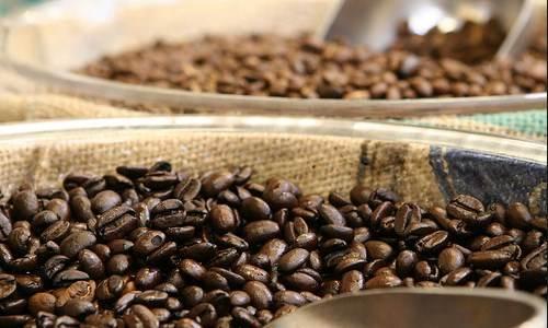 Coffee Gayo dan Toraja Bahan Dasar Blending Kopi Dunia