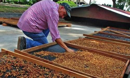 Rantai ekspor kopi indonesia
