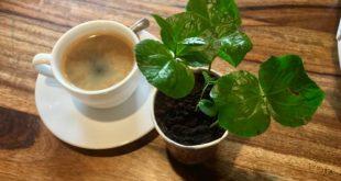 Mengenal Basic Menu Americano Coffee
